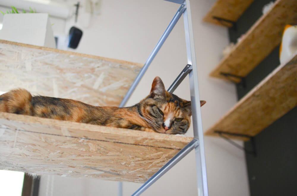 IKEA家具でDIYしたキャットタワーでくつろぐ愛猫、パッタイ。