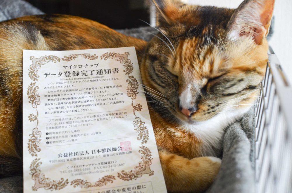 マイクロチップ登録完了通知書と飼い猫のパッタイ。