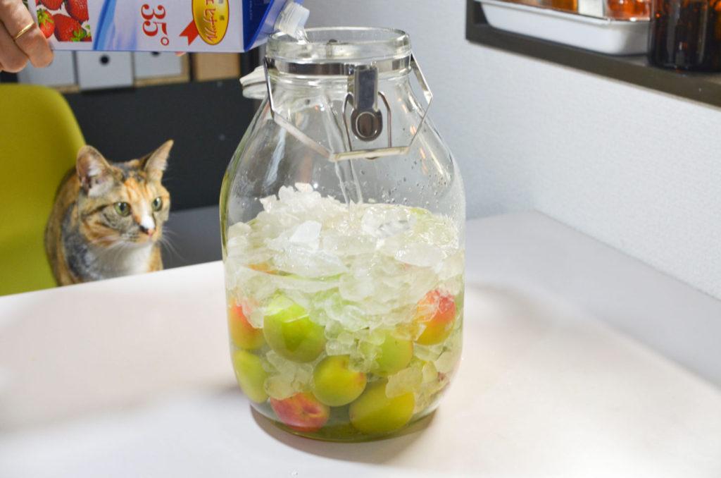 梅と氷砂糖を入れた瓶にホワイトリカーを注ぎます。