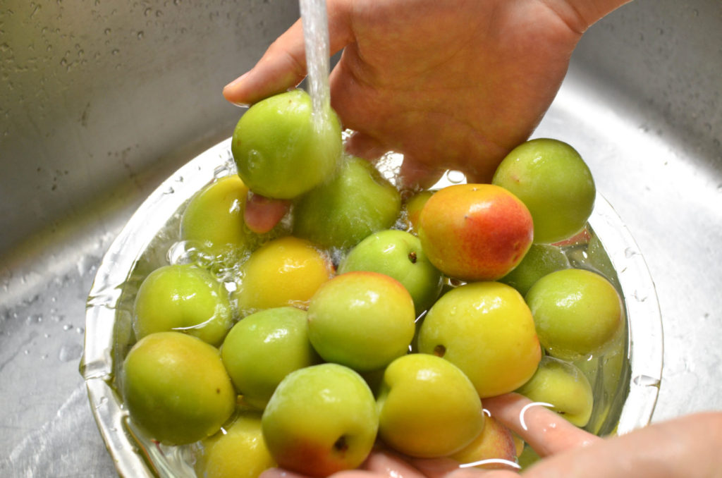 梅が傷つかないように流水で優しく洗います。
