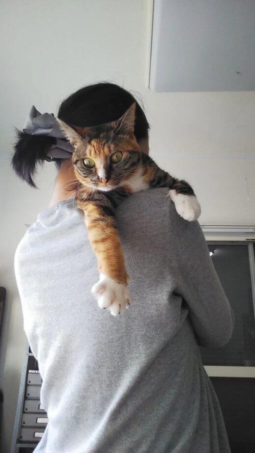 だっこで肩に乗るのが大好きな愛猫・パッタイ。