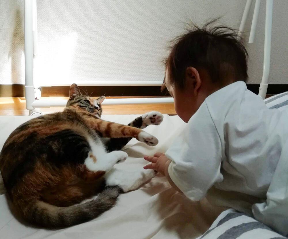 猫を認識しだした娘。猫にちょっかいを出して怒られています。