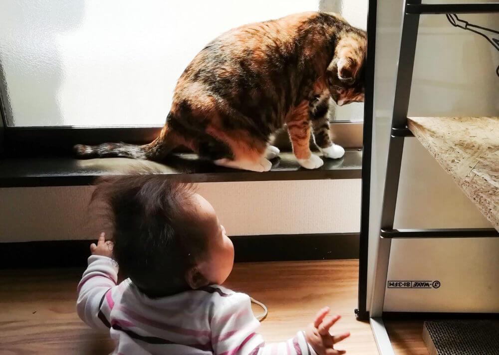 ずりばいで猫を追いかけるトコちゃん。
