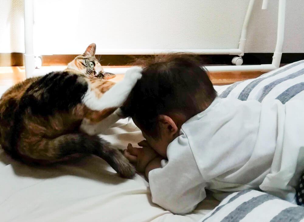 娘を傷つけず「しつけ」をする猫のパッタイ。
